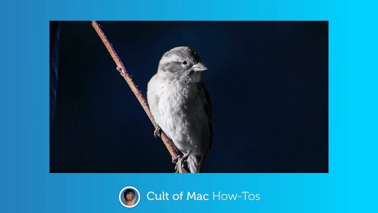 How to tell if Silver Sparrow malware is hiding on your Mac
